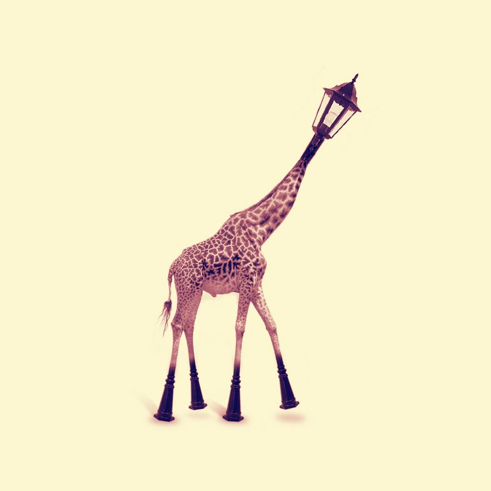 3-jirafa